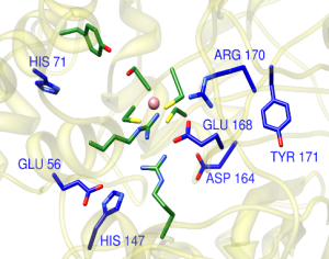 nitrile hydratase active site image